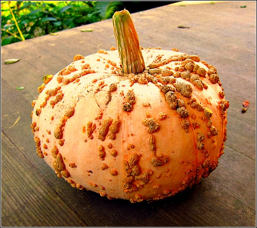 warty pumpkin galeux deysines Galeux dEysines Pumpkin: You Had Me at Hello