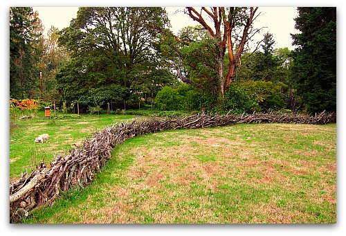 stick fence and boz I Built a Fence That Fell From the Sky