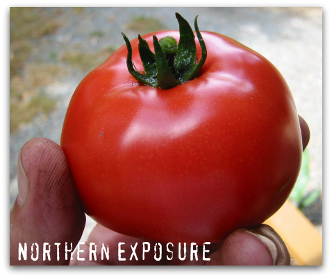 Picking Favorites: Great Tomatoes for Puget Sound