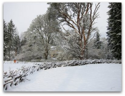 Vashon Snow Globe: Mother Nature Shakes It Up
