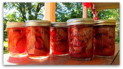 rhubarb pickles jarred up