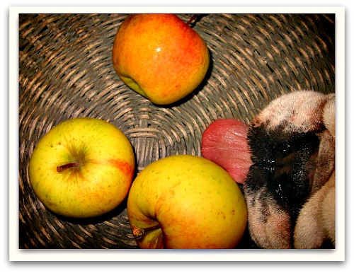 Boz and the Apples of His Eye