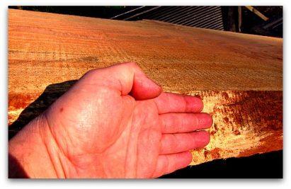 large fir board