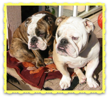 Bulldogs extraordinaire: Boz and Gracie