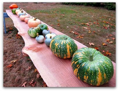 heirloom pumpkins on display