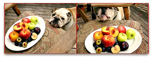 fruit loving bulldog Nurseries, Nurseries Galore