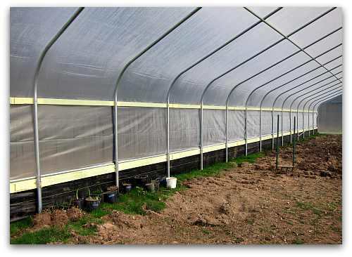 interior high tunnel hoophouse1 When a Greenhorn Builds a Greenhouse