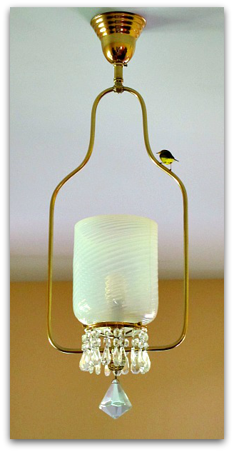 Bird in the house resting on a chandelier
