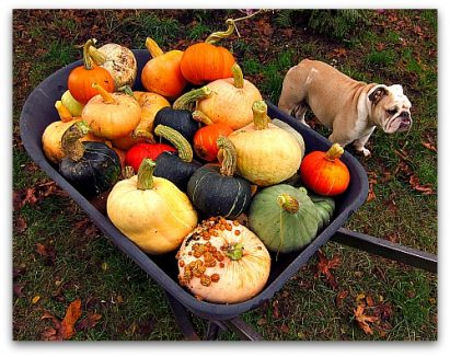 Saving Pumpkins: How to Store Winter Squash