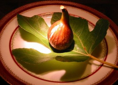 Bayernfeige Violetta Fig Finishes Out the Season