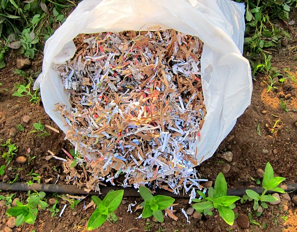 Shredded Paper As Garden Mulch Tall Clover Farm