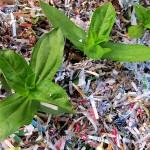 shredded paper garden mulch