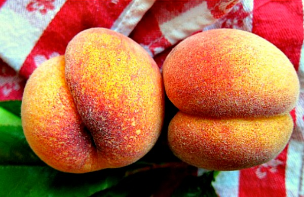 Avalon Pride Peach1 The Best Way to Ripen Peaches