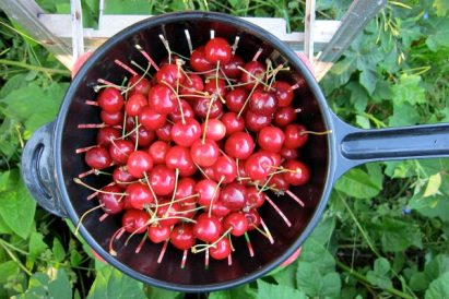 The Grow Report: Cherry Trees