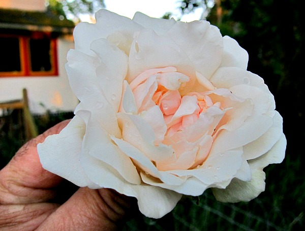 White Flowers: Dressing-Up the Garden
