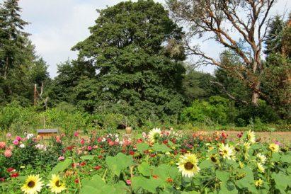 garden tour front field
