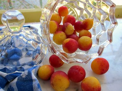 Mirabelle Plum: Nature's Little Gumdrop